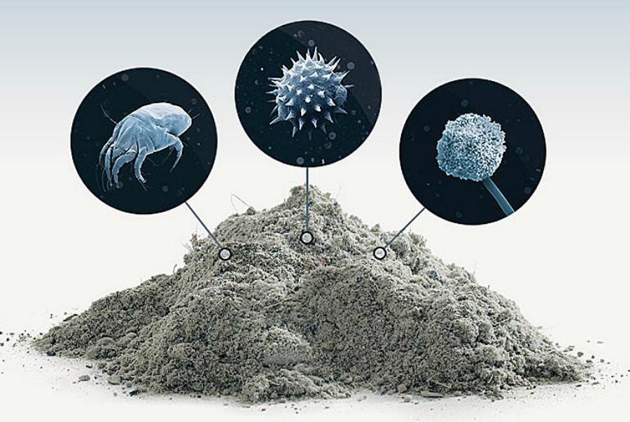 домашняя пыль состав