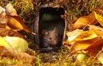 Мышки на фото-сессии! Фотограф специально построил для них деревеньку)