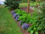 Садовые хлопоты: какие однолетники нужно посеять в марте