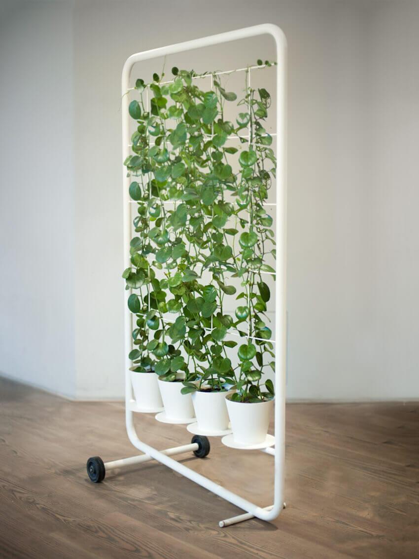 зонирование комнаты растениями