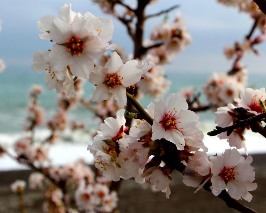 Алушта весной