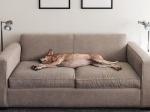 Лучшая мебельная обивка для дома с питомцами