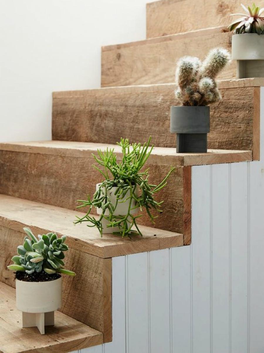 кактусы на лестнице