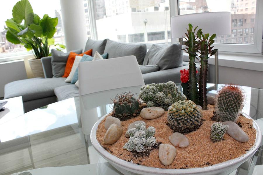 кактусы в интерьере гостиной