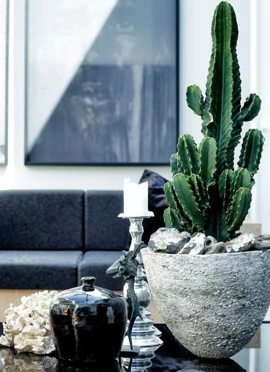 украшение квартиры кактусами