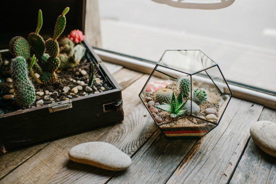 кактусы декор
