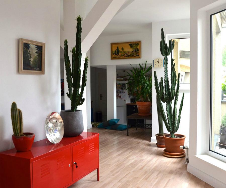 большие кактусы в интерьере